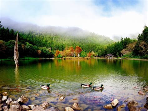 Mountain Lake Stones Wild Ducks Dense Green Pine Forest