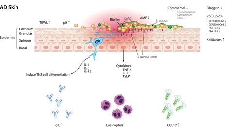 JCM   Free Full-Text   Microbiome of the Skin and Gut in