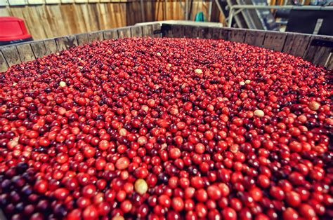 The Cranberry Marketing Committee USA Says Good News for