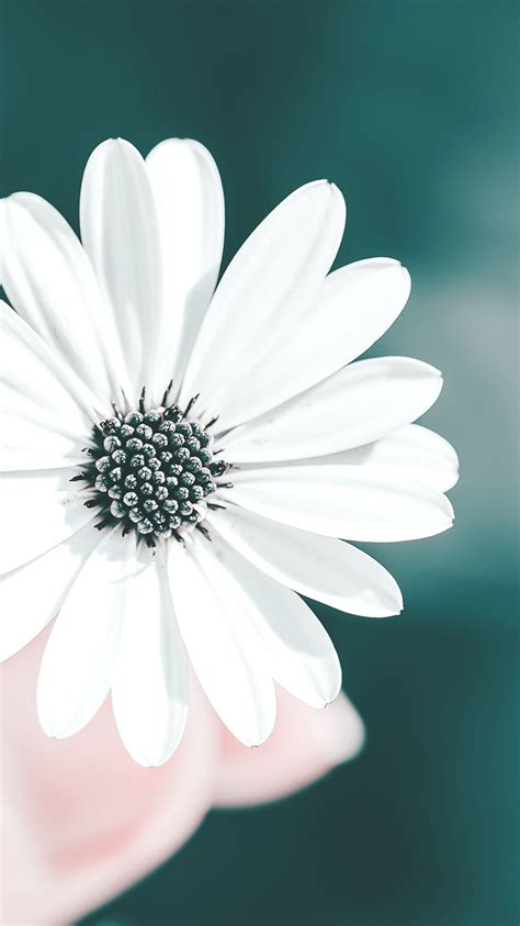 White-Flower-in-Hands-iPhone-Wallpaper - iPhone Wallpapers