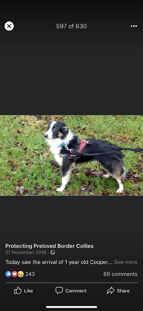 Protecting Preloved Border Collies - Home | Facebook