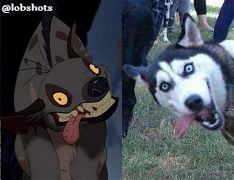 Dogs are the Best… How 'Bout This Photobombing Husky