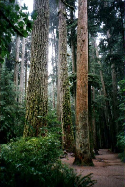 Cathedral Grove   British Columbia   Our Big Tree Heritage